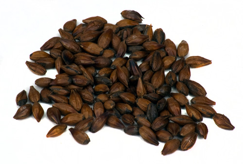 Briess Roasted: Barley RG (1)