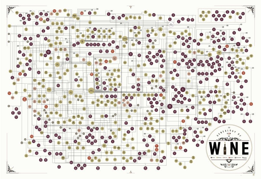 Genealogy of:Wine Poster 39x27 (1)